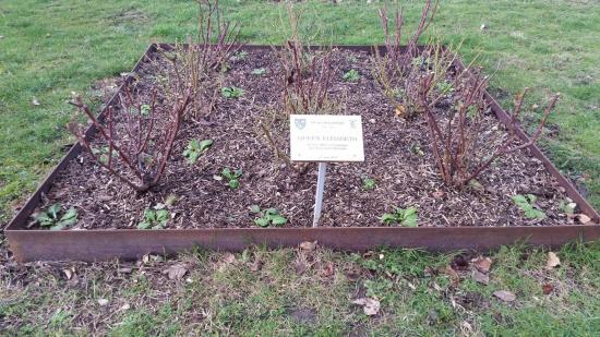 Queen Elisabeth au parc Songeons